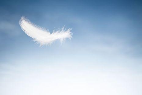 feathercloud-56b78ee05f9b5829f83a019d